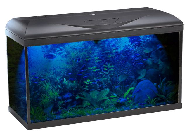 Plafoniera Led Acquario Marino 120 Cm : Reef tank lt acquario marino di barriera youtube