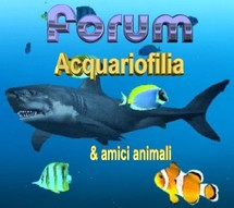 logo forum acquariofilia