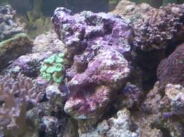 Acquariodiscount vendita on line articoli per acquario for Acquario marino in vendita